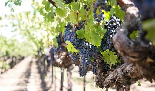 Formations en vins et spiritueux : les métiers faits pour vous